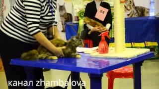 2014 как проходит конкурс соревнование кошек мейкуны ВДНХ выставка кошек