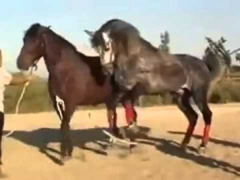 animal hayvan insan pornosu  Porno izle Sikiş Video Sex