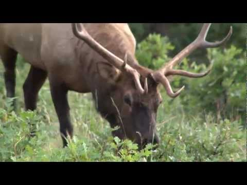 Rio Brazos Outfitters - Outfitters Showcase Highlights