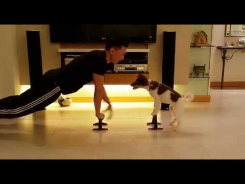 Fitness exercise with your dog (One, Two, Three, Four, Kiss??) - Eric Ko & Teeny