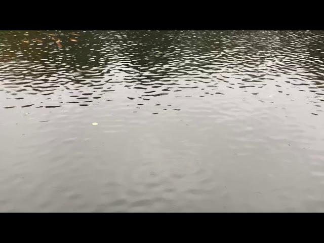 Ihmsen - Der Forellengott Forellensee Rosenweiher Überall Goldforellen