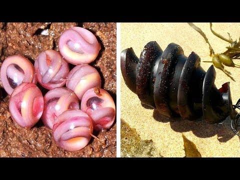 9 bizarre Eier. Tierzuchtmethoden, die dich umhauen werden!