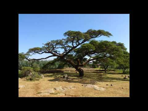 Trekking in Ethiopia / Lalibela region