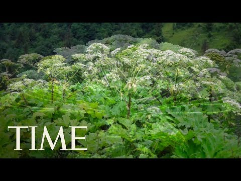 Virginia Teen Suffered Third Degree Burns From A Giant Hogweed Plant | TIME