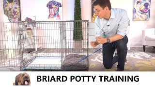 Briard Potty Training from WorldFamous Dog Trainer Zak George  How to Potty Train a Briard Puppy