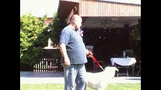 Dogo Argentino Rüde soll eingeschläfert werden