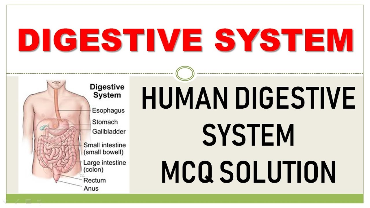 HUMAN ANATOMY : DIGESTIVE SYSTEM MCQ SOLUTION WITH ...