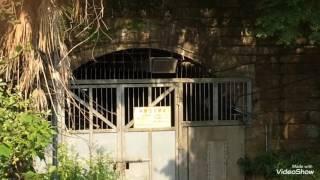 本当にあった!!大正時代 伝説のトンネル 近鉄 旧生駒トンネル跡地