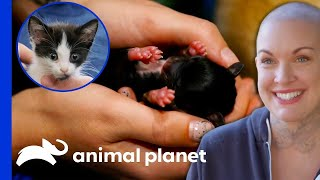 The Cutest Animals Rescued By Amanda | Amanda To The Rescue