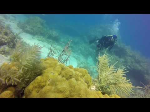 Scuba Diving French Reef