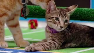 Kitten Bowl 2017