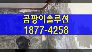 일산서구 곰팡이제거, 송포동 대화동 탄현동 일산동 단열…