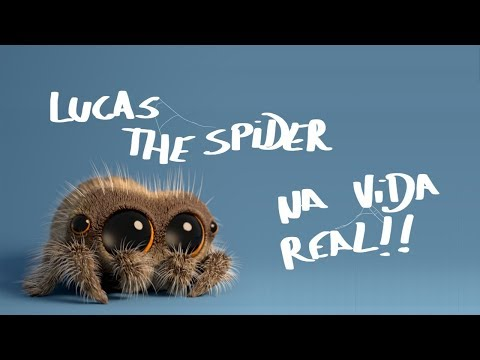 Lucas the Spider na vida real!