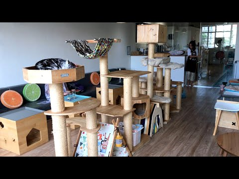 A visit to Singapore's First Cat Cafe Neko no Niwa
