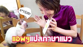 แอพแปลภาษาแมว-คุยกับแมวได้