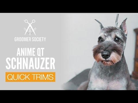 Anime Schnauzer Face | Dog Grooming