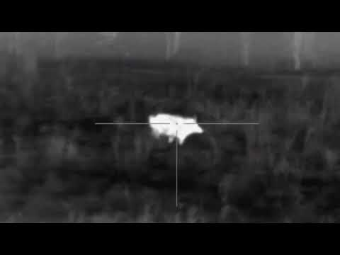 Another hog down suppressed 308 pulsar xq50 trail