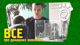 Мастер Класс От Аква-Ленда: Григорий Полищук. Все О Домашних Животных