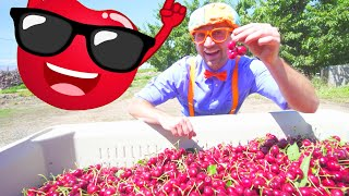 Blippi at The Cherry Farm and More Blippi Fun | Learning Fruits and Healthy Eating For Kids