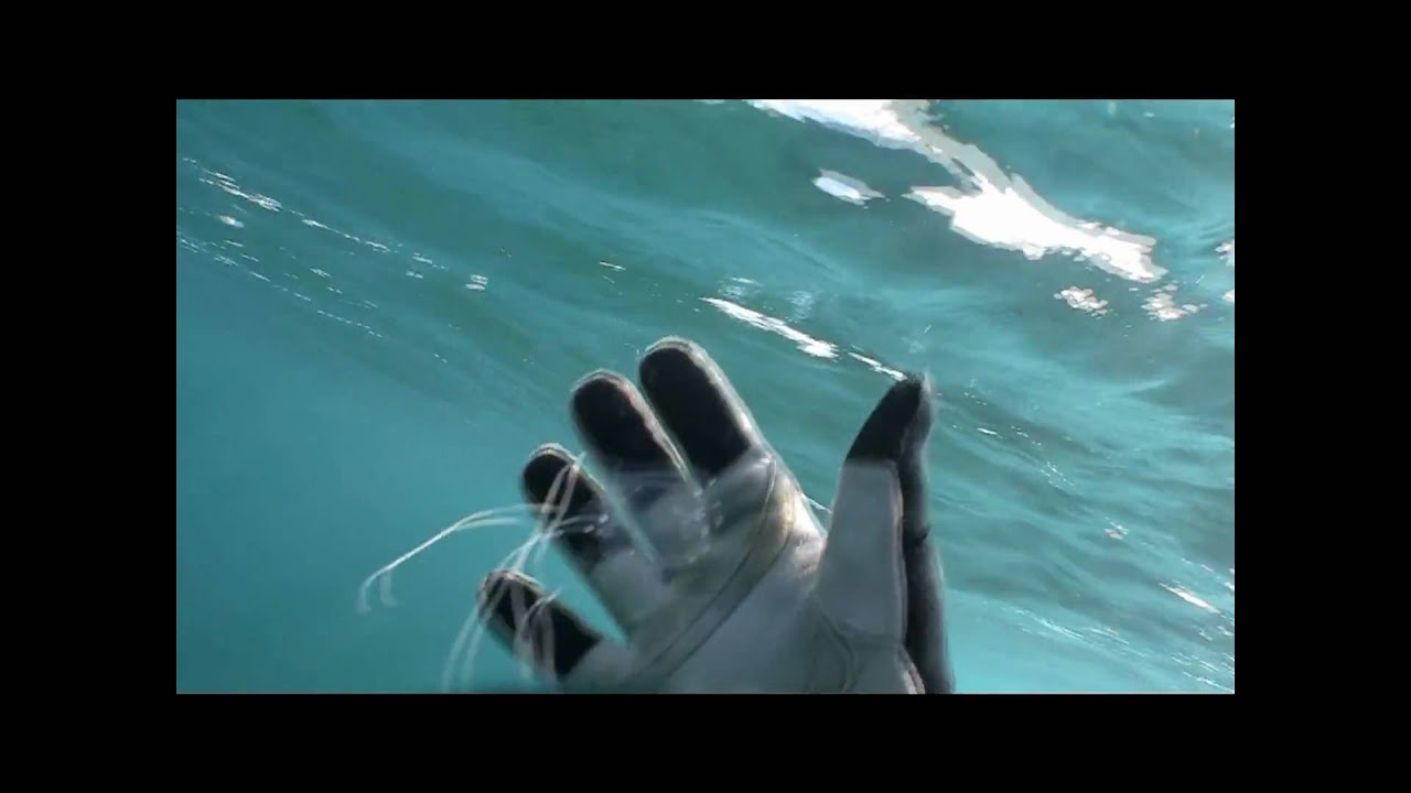how to catch a box jellyfish