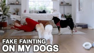 I Fainted, This is my Dog's Reaction | WahlieTV EP571