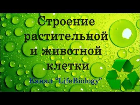 Вопрос: Как сделать 3Д модель клетки животного или растения?