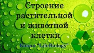 Строение растительной и животной клетки