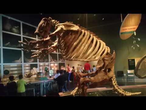 Field trip to the Western Science Museum with Megan Cope Elementary school - RoodTube