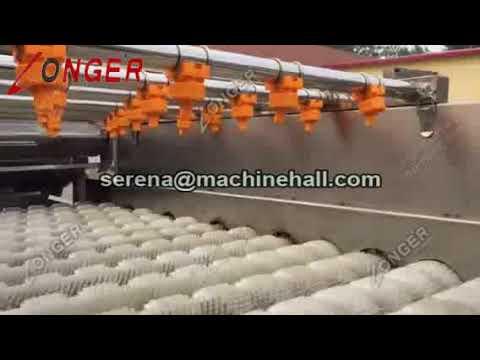 Onion Washing Line Carrot Potato Cleaning Machine for Ginger Garlic