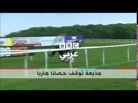 بي_بي_سي_ترندينغ | شاهدوا كيف تمسك مذيعة بريطانية بحصان هارب  - نشر قبل 53 دقيقة