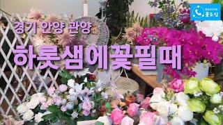경기 안양 관양 '하롯샘에꽃필때' [꽃집…