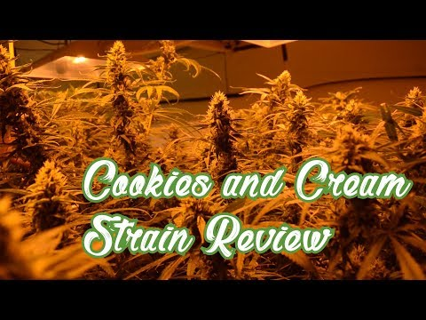 COOKIES & CREAM STRAIN REVIEW (Ep 35) THE STRAINGER