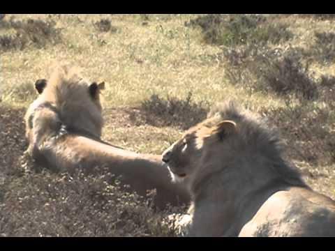 MARTIN Safari Sudafrica