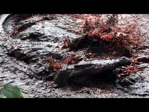 Crocodile Massacre at the Battle of Ramree Island