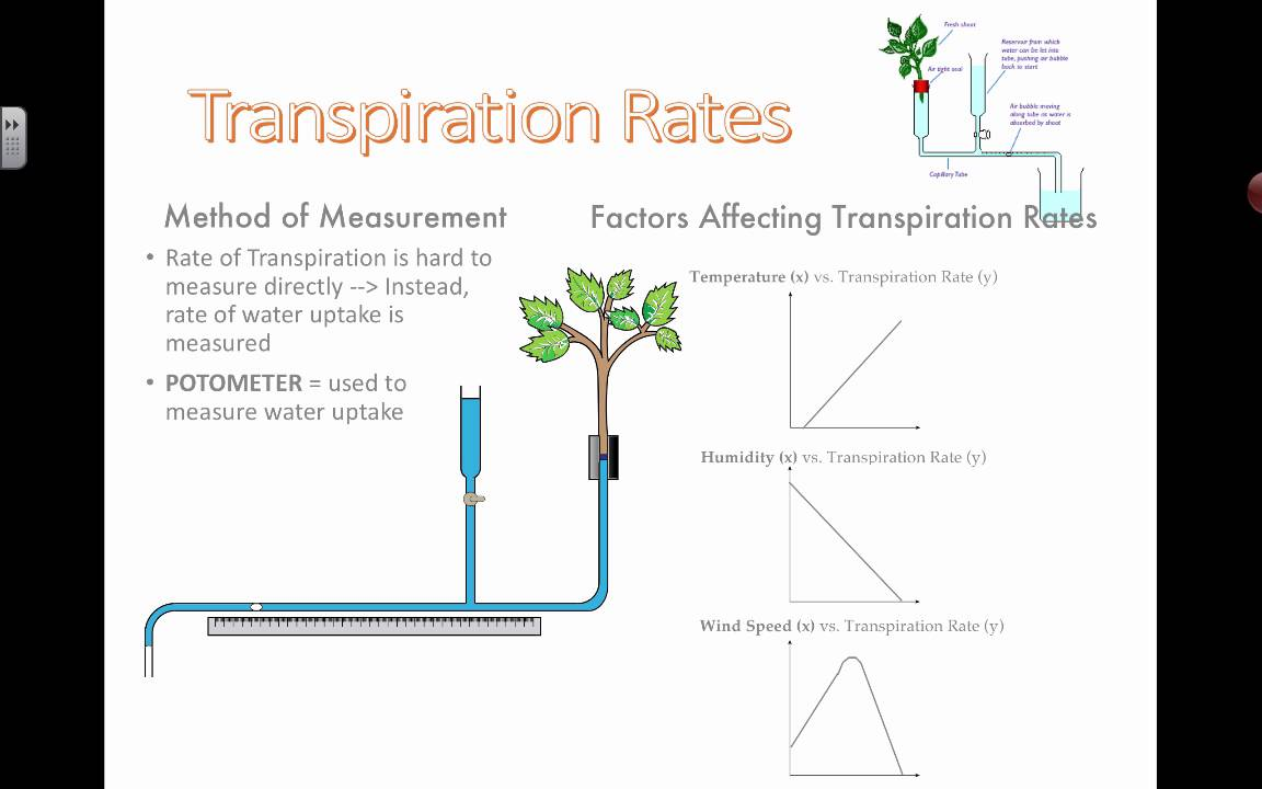 how temperature affects transpiration