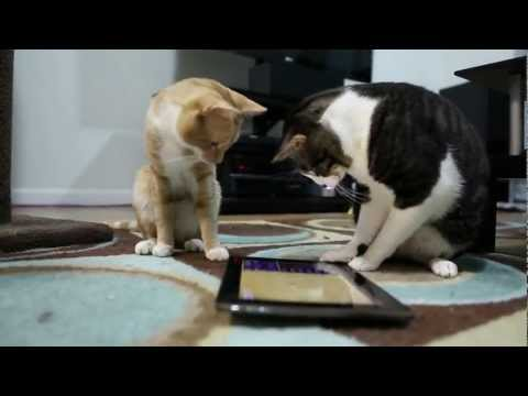 Cat Playground Game For Cats Apps On Google Play