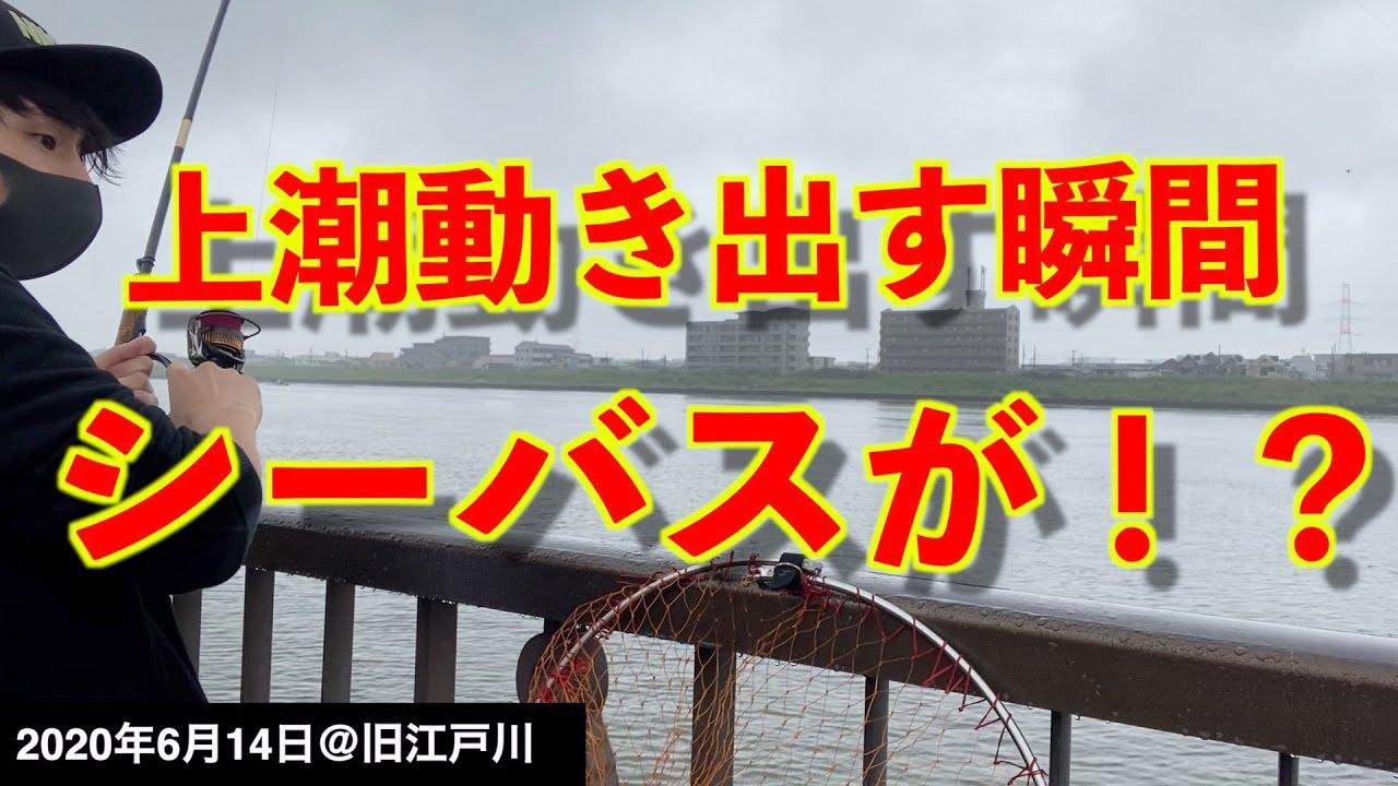 【旧江戸川で釣り】梅雨入り前の東京湾河口!朝マヅメ狙いで釣りをしてみたら…!《2020年6月14日》