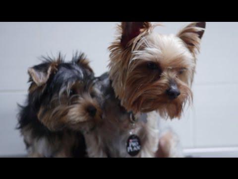 Собака-аллергик: 7 признаков заболевания