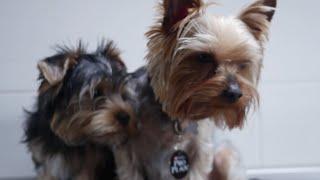 Аллергия у собак: симптомы и причины – Purina Pro Plan Ukraine(, 2016-03-01T18:24:30.000Z)