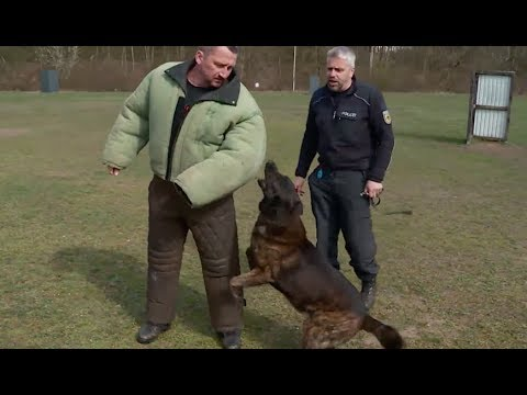 So werden Schutzhunde der Bundespolizei ausgebildet