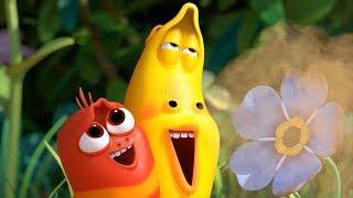 LARVA - BEAUTIFUL FLOWERS   Cartoon Movie   Cartoons For Children   Larva Cartoon   LARVA Official
