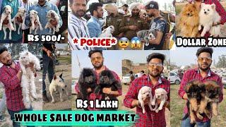 Cheapest Dog Market outside Dog Show (Labrador , Pug , German , Rottweiler , Tibetan Mastiff , Cats)