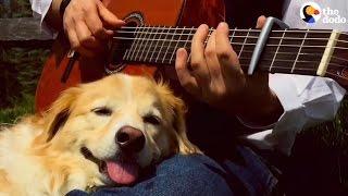 Guy Serenades His Rescue Dog | The Dodo