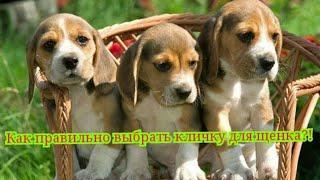 Как выбрать кличку для щенка???|Правильный выбор клички для собаки♥