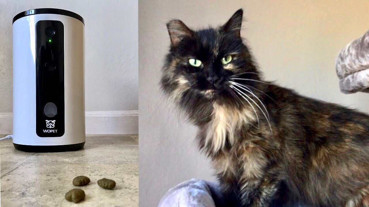 Smart Pet Camera Review - Cats Enjoy Treats While Foster is Away