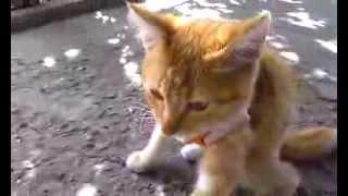 Спокойный котенок