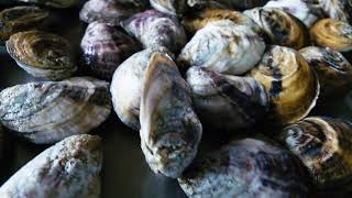 The Science of Oysters