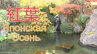 Что Поражает в Японии Осенью