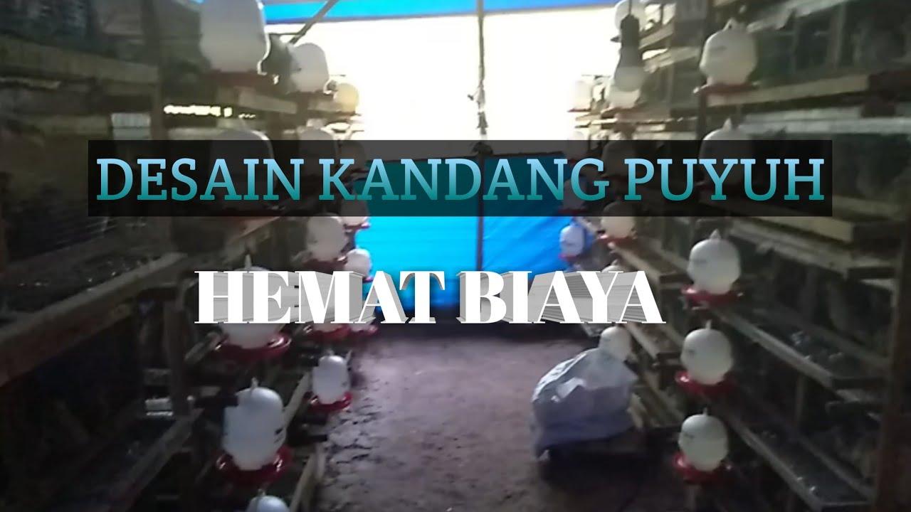 DESAIN !! KANDANG PUYUH HEMAT BIAYA - YouTube