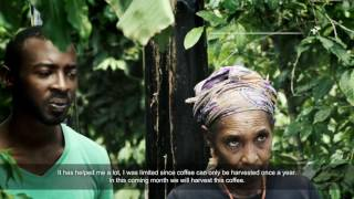 Impact of climate change on Rwanda's tea and coffee sectors - mini documentary